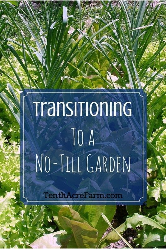 Transitioning to a No-Till Garden: [ TheGardenFountainStore.com ]