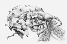 Dashi Namdakov — Graphical works