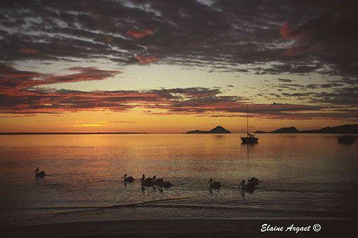 The expanse of water in Port Stephens NSW gives wonderful opportunities for photographing sunrises. #EvenEasierDigitalPhotography #sunrise #PortStephensNSW