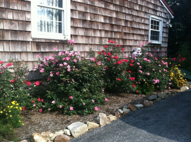 23 best my yard images on pinterest 3 4 beds garden art for Garden design with roses