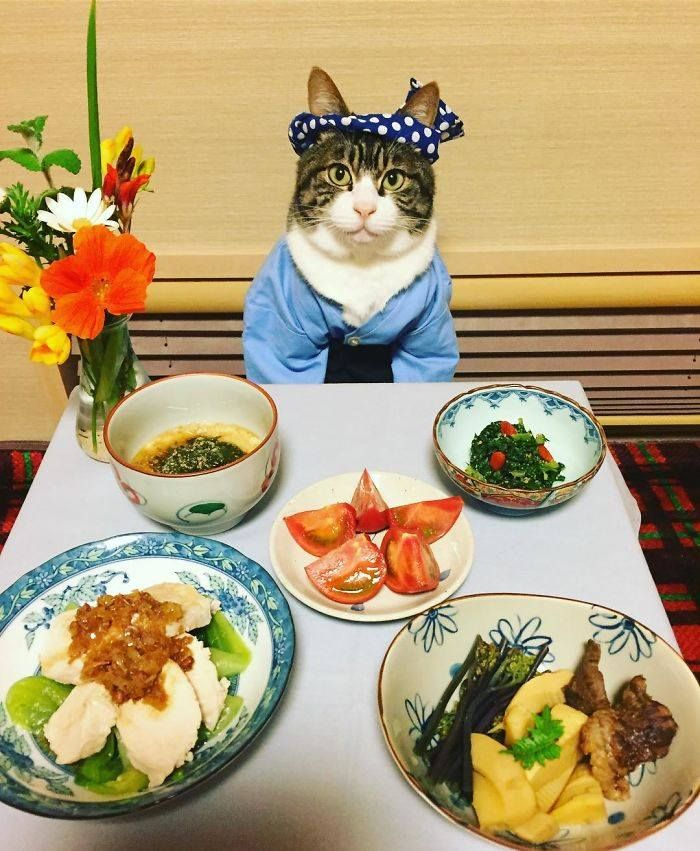 Cat Dresses Up To Have Dinner With His Mom, http://babepup.com/dining-dressed-cat-maro-japan/