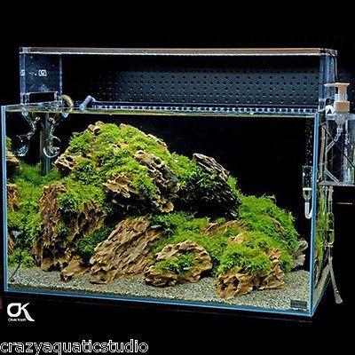 Random Pick Ada Dragon Stone Rock Aquarium Moss Plant Shrimp Aquascaping Ebay In 2021 Aquarium Aquascape Fish Tank Terrarium