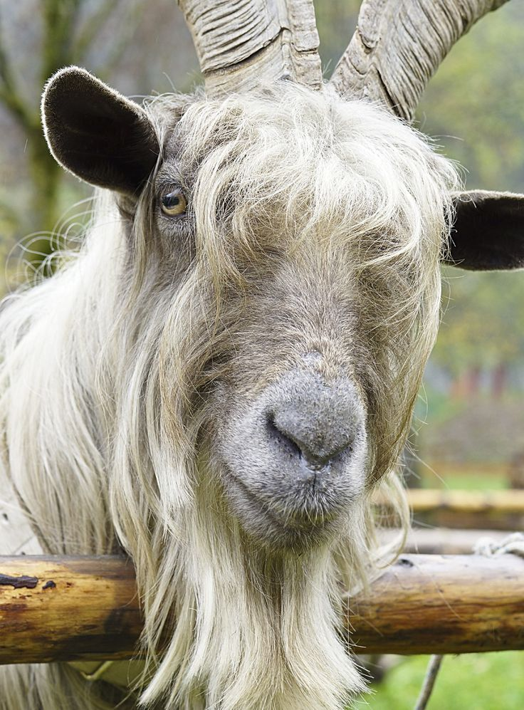 Alpaca Wool Sweaters