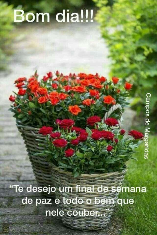 Pin De Luciana Colvero Em Bom Dia Flor De Jardinagem Flores