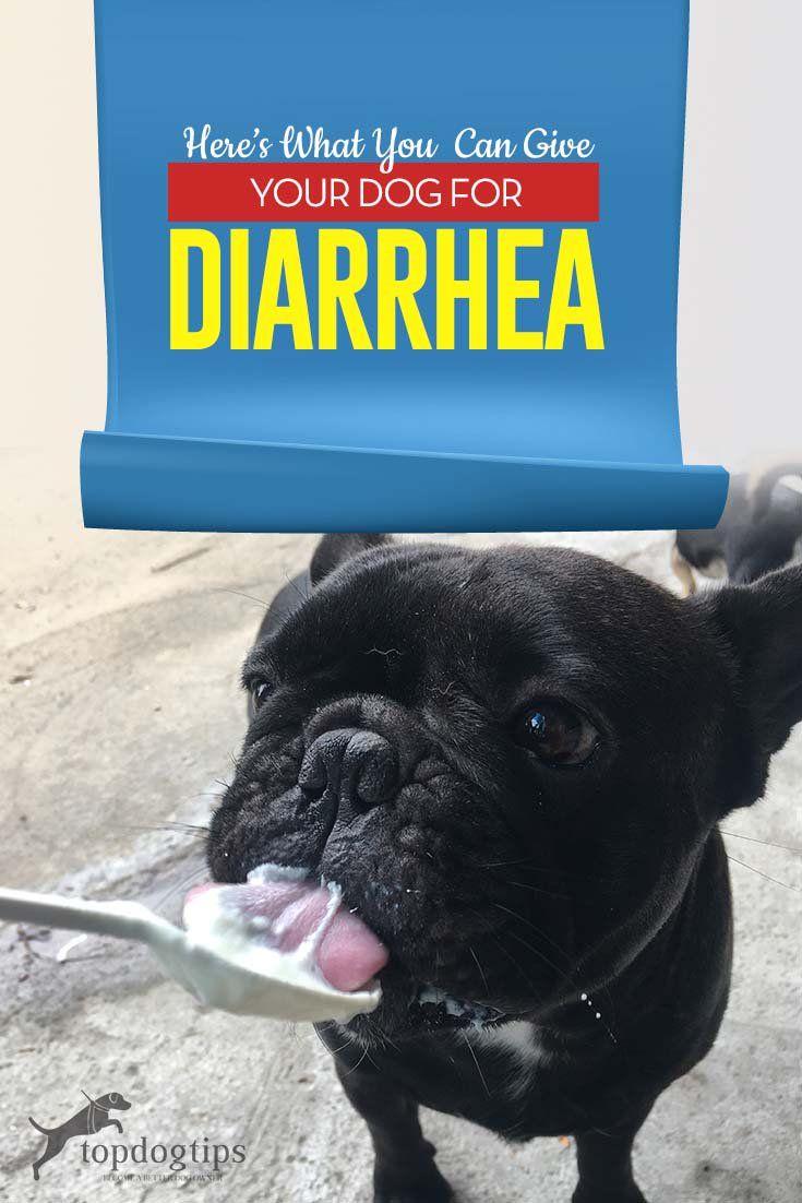 What To Feed A Dog With Diarrhea Dog Has Diarrhea Dog Diarrhea