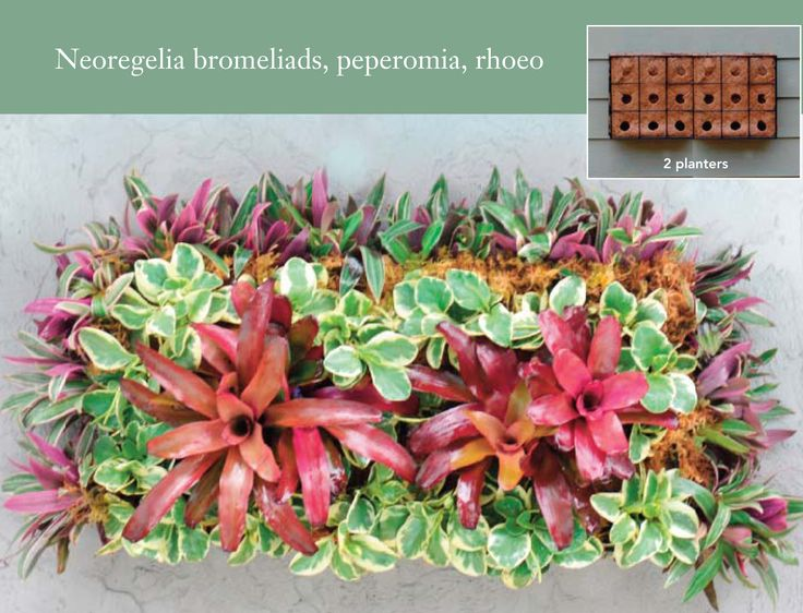 25 trending living wall planter ideas on pinterest succulent wall vertical plant wall and wall gardens