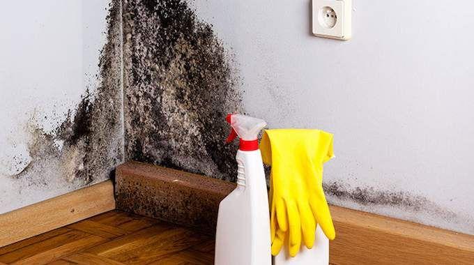 Comment liminer la moisissure sans produits chimiques - Comment nettoyer moisissure joint salle de bain ...