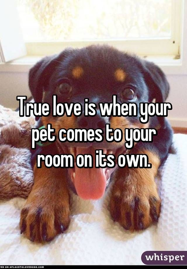 """True love is when your pet comes to your room on its own."""