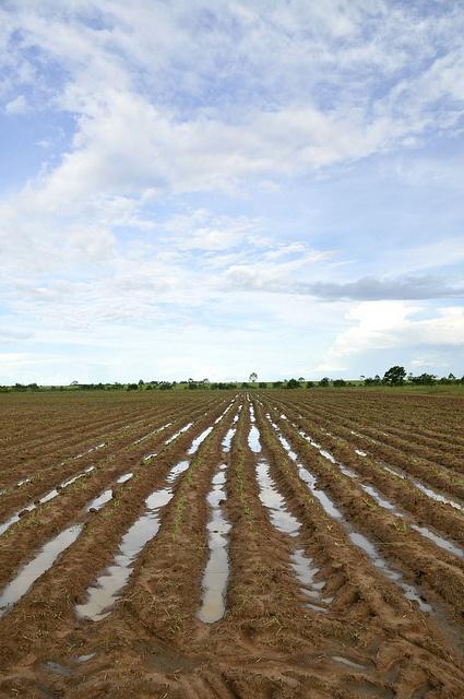 ¿Cómo convertir los suelos ácidos de la altillanura en una capa productiva?