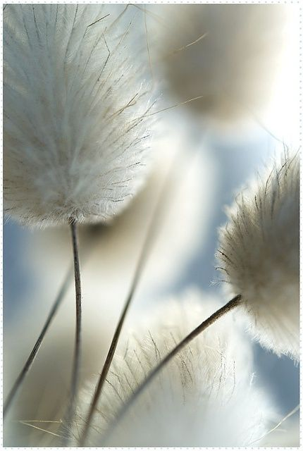 White Is Wonderful!