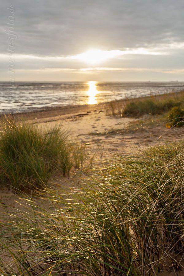 »Strandhafer auf Amrum im Gegenlicht« DETAIL: Ein kleiner Abschnitt mit Strand, direkt am Wattenmeer auf Amrums Ostseite. Auf den kleinen Dünen wächst Strandhafer.