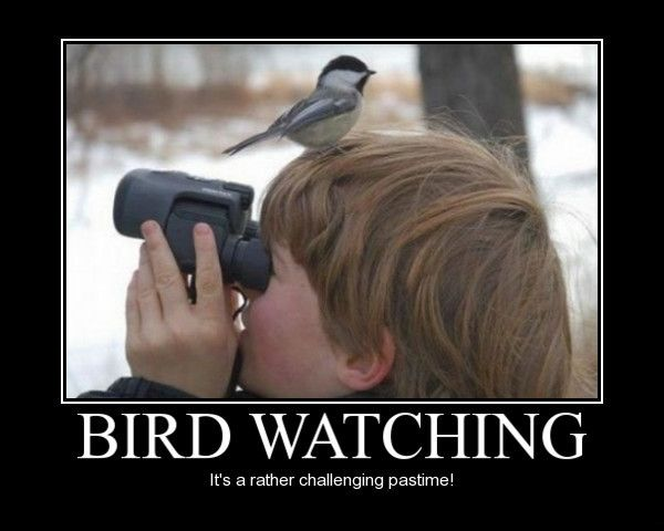 i feel like this is me right now i m new at this bird