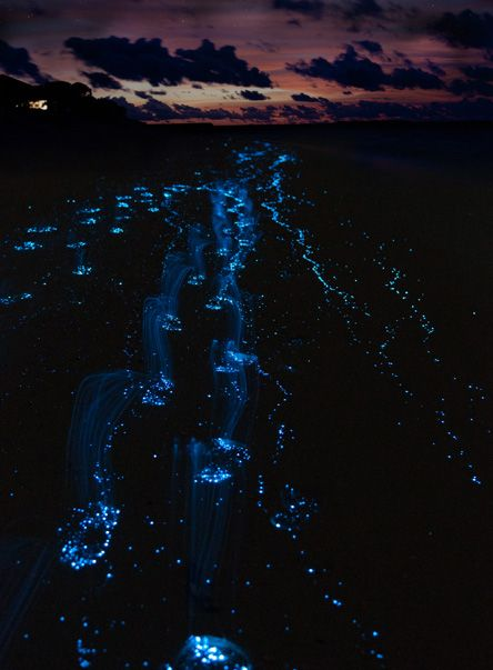 Fajardo, Puerto Rico, Bioluminescent bay. This is where my boyfriend is at....I'm so jelly!
