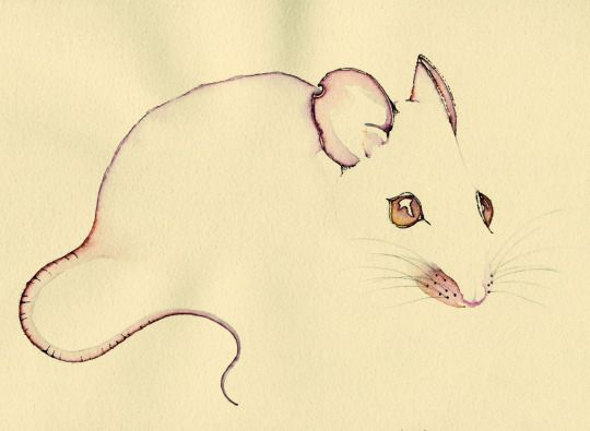 Line Drawing Rat : 61 best watercolor images on pinterest water colors watercolors