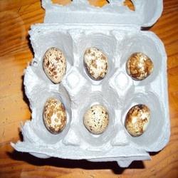 Tratamente pentru par oul de prepelita in tratamentul intern si extern pprepelite.ro   prepelite   oua de prepelita   cresterea prepelitelor