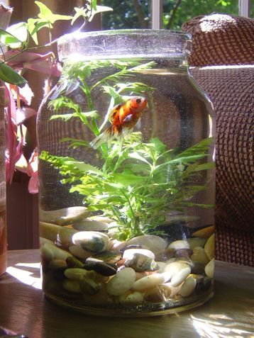 Turn your mason jar into a fish bowl. Love this idea!