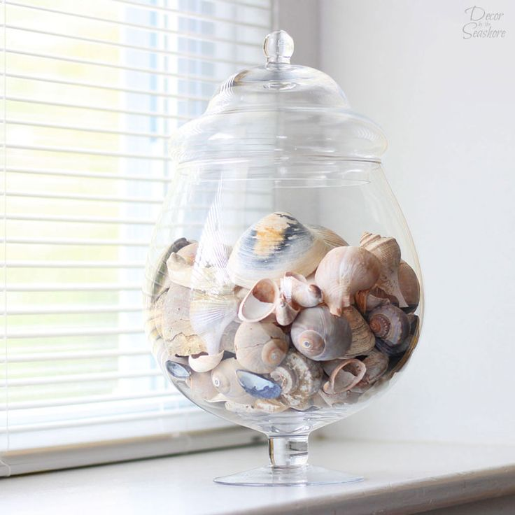 Do you know how to clean seashells the RIGHT way? Yes, there is a right way to clean seashells! This little trick is perfect for getting rid of the gunk and getting those seashells ready for crafting and displaying around the home! I just can't get enough of that beautiful seashell decor!   decorbytheseashore.com