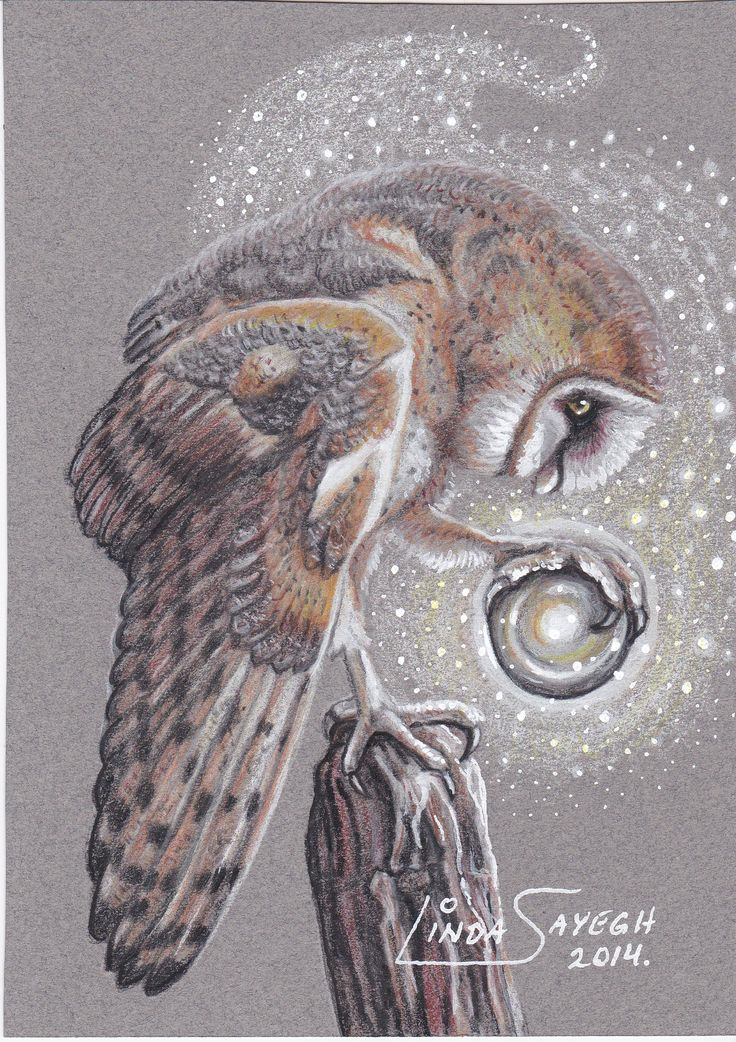 The Little Seer... A small 5 x 7 inch drawing of a little Barn Owl who seems to be into the magic of devination... Dedicated to my friend Janna, who I just found out likes Owls... Colored pencils on grey Mi-Teintes paper with some black and white Sharpie paint pen.