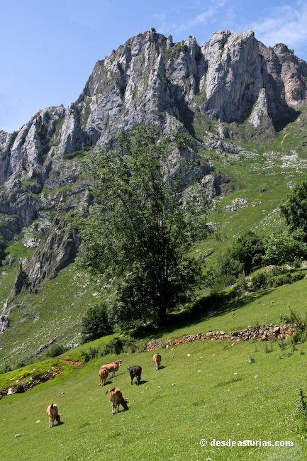 Tielve Cabrales, Asturias Spain [Más info] http://www.desdeasturias.com/tielve-cabrales-asturias/