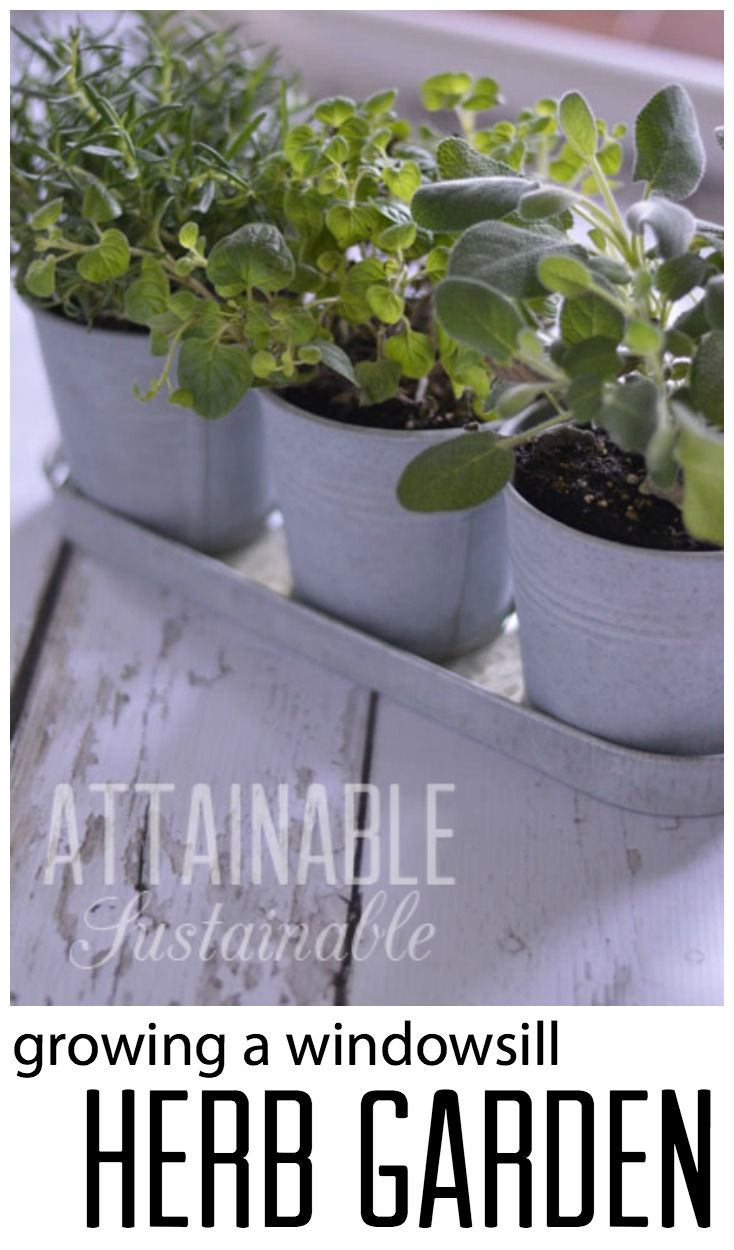 5972 best gardening images on pinterest gardening garden tips