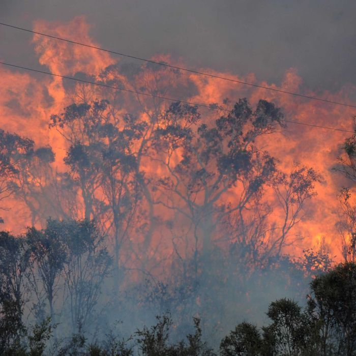 In pictures: NSW bushfires