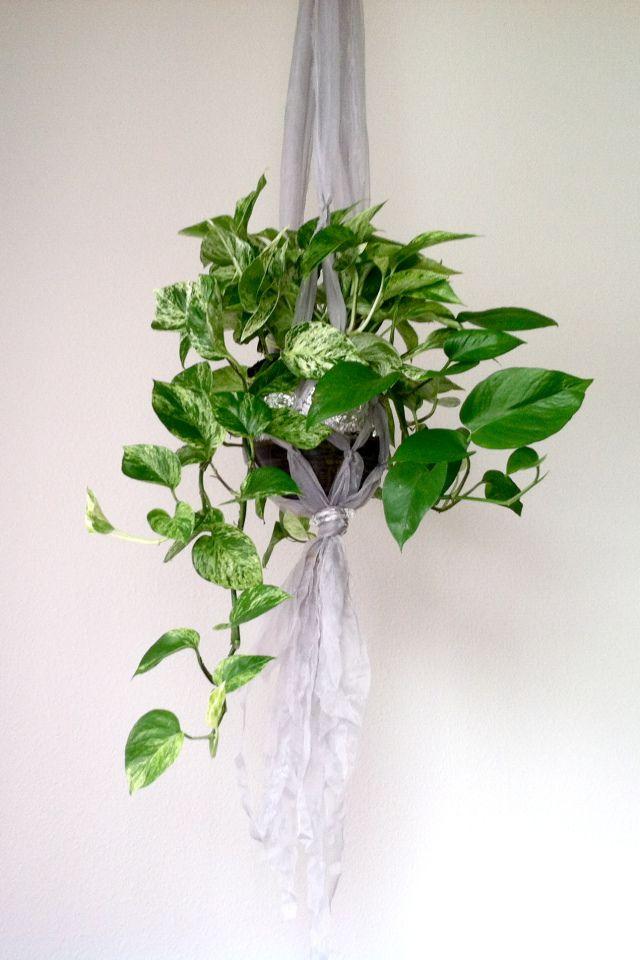 96 best DIY Plant Hanger images on