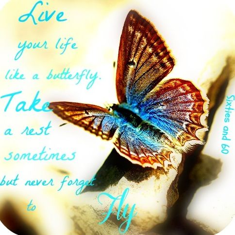 """Love your life like a butterfly quote via """"Sixties and 60"""" at www.Facebook.com/pages/-Sixties-and-60/276454592397627"""