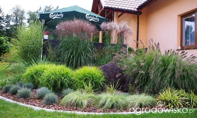 Ogród Anety - strona 8 - Forum ogrodnicze - Ogrodowisko