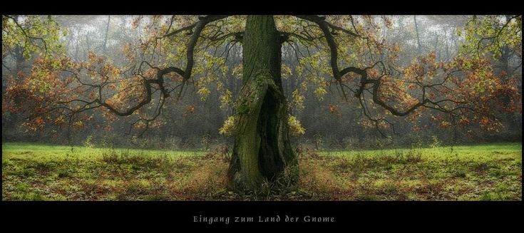 door to land of the dwarf  by greenfeed on DeviantArt .. [last week in the wood. fot with canon 300 d and photoshop. duplicat and diverse manips. two trees. look front from tree. ;o) funny fantasy pic.]