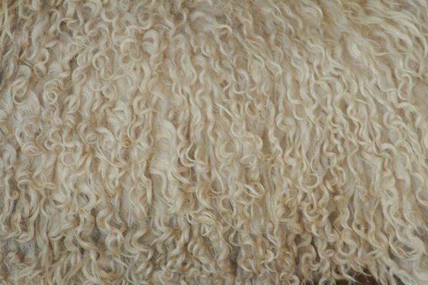 wollen tapijten Archives - Mercer Carpet One