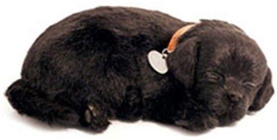Adopteer je eigen huisdier. De Perfect Petzzz zien eruit als echte huisdieren, door hun zachte vacht en doordat ze lijken te ademen. Ze worden geleverd met een mandje, borstel en certificaat van adoptie. De Perfect Petzzz maken geen geluid en hebben een afmeting van 27 x 17 x 10 cm. Exclusief 1 D batterij. Er zijn verschillende Perfect Petzzz pups en katten verkrijgbaar.   Afmeting: volgt later.. - Perfect Petzzz soft Black Labrador