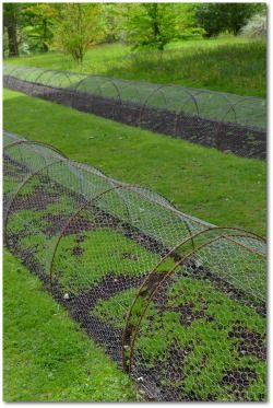 Vegetable Garden Fence Plans and Ideas to Keep Critters out of your Garden!