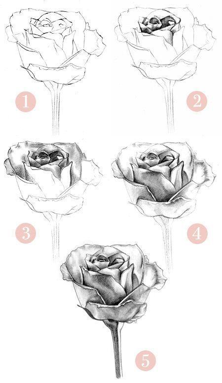 Rose Zeichnungen in Bleistift   wie ein Draw-a-ros…