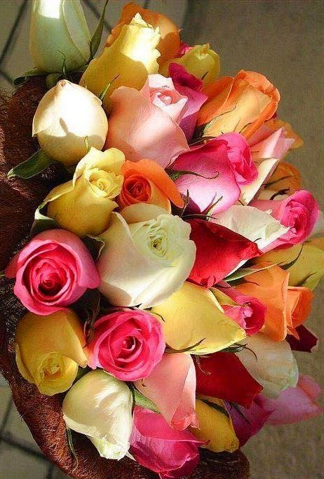 Roses via Lovely Roses Facebook page