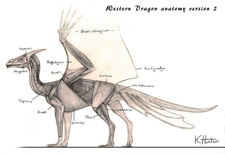 Anatomy of a dragon