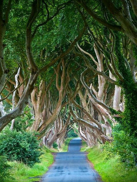 The Dark Hedges, Northern IrelandThe Roads, Buckets Lists, Northernireland, Beautiful Places, Trees, Northern Ireland, Dark Hedges, Travel, County Antrim