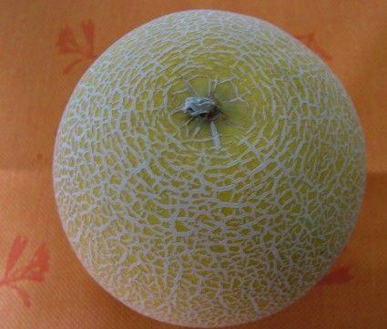 cantaloupe / rockmelon