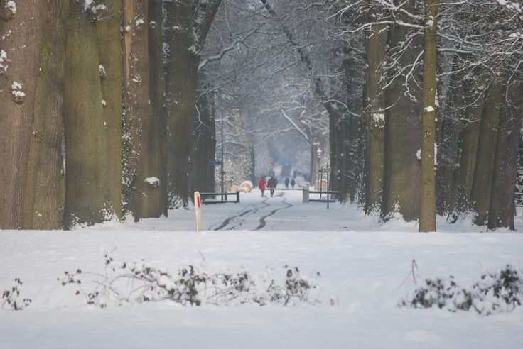 De Twickelerlaan in de winter