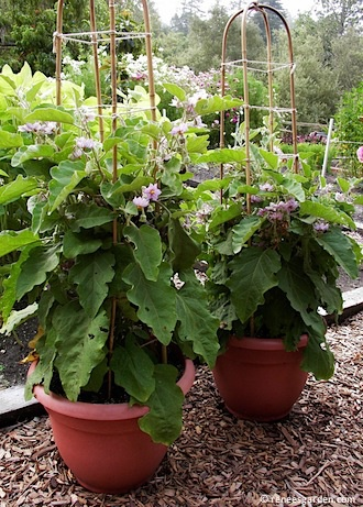 30 Best Container Gardens From Seed Images On Pinterest 400 x 300
