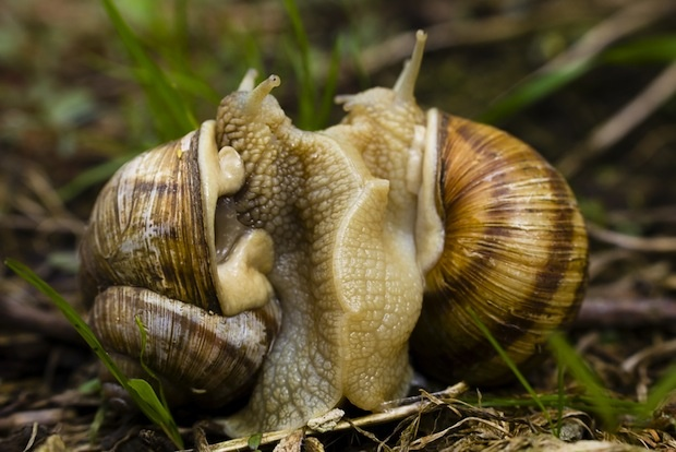 10 Wild And Wacky Animal Mating Habits Causes Animals