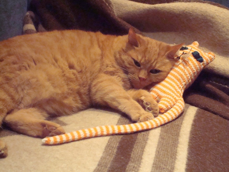 Knitted Ginge Cat and live ginge cat!