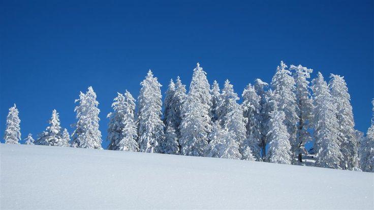 #austria #winter #salzburg #russbach #waldwirt