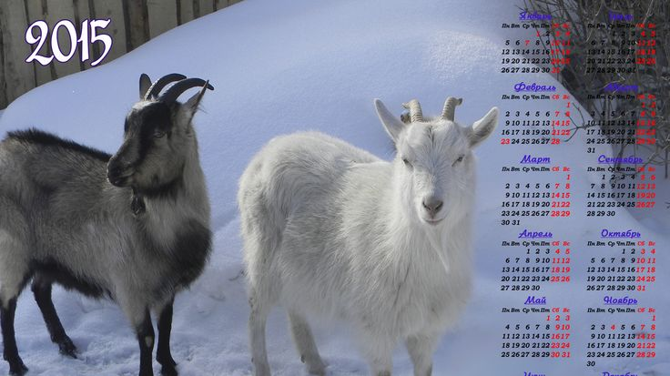 Скачать обои календарь,  на 2015 год козы,  на зимней прогулке бесплатно для рабочего стола в любом разрешении 728x768 — картинка №596271