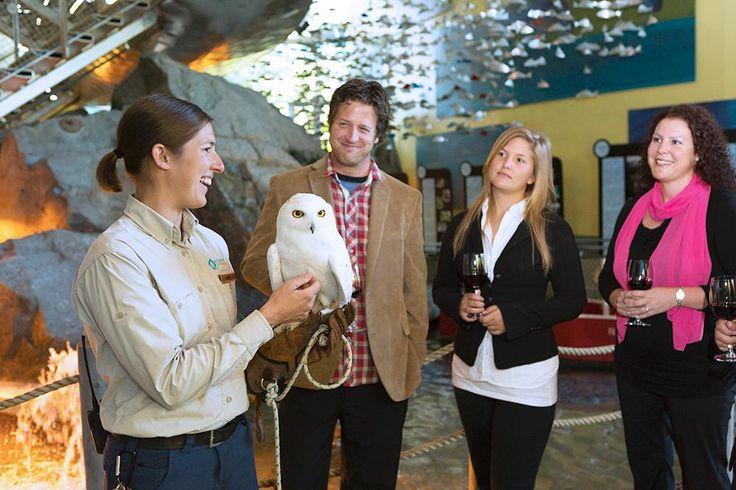 Présence d'un animal ambassadeur à l'Aquarium du Québec pendant une pause de réunion d'affaires.