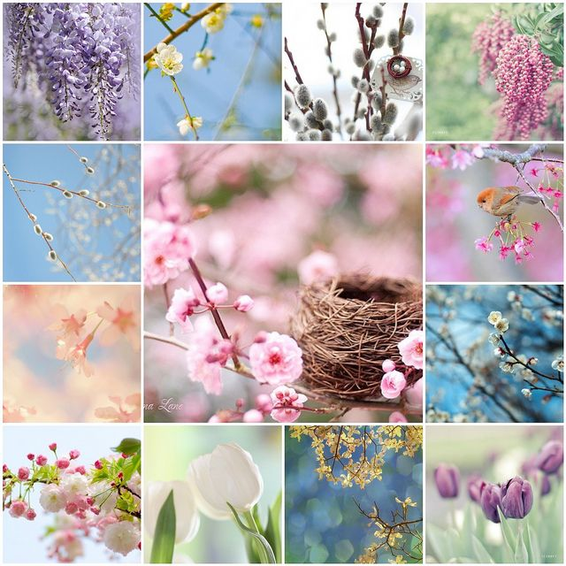 Spring Blossoms - some of my favorites by LHDumes, via Flickr