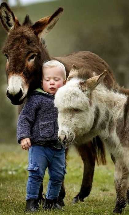 Adorable Miniature Donkeys