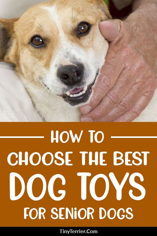 Top 10 Best Toys For Senior Dogs 2019 Edition Dog Toys Best