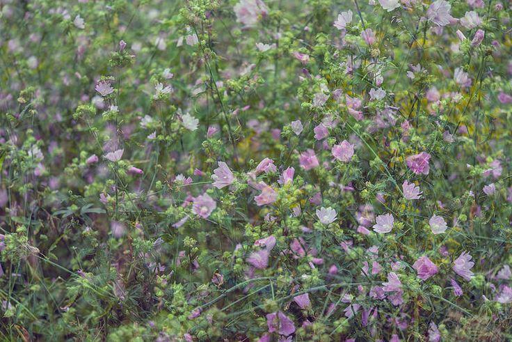 Flora Plenteous 40