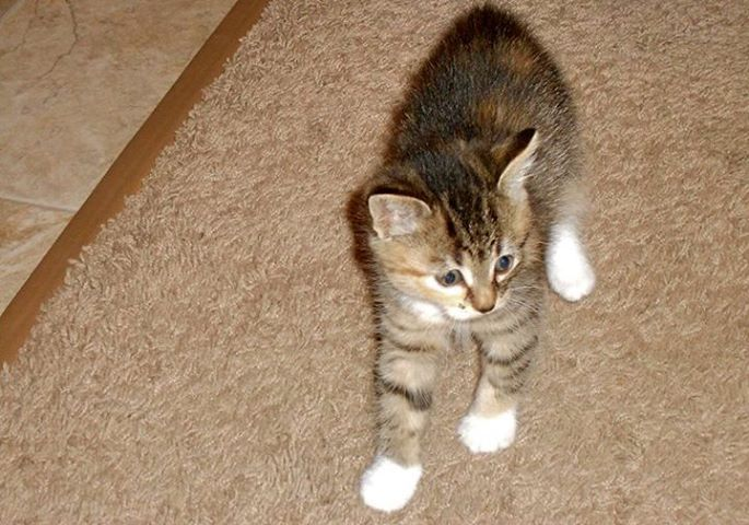 """Alberta's lost pet locator shared Lethbridge and Area - Lost & Found Pets's photo. Yesterday Posted by Carole Despres on Tuesday, July 9th/2013: - LOST KITTEN in COALDALE - """"Our kitten 'SNOW-DROPS', went missing yesterday, Monday, July 8th. She is 5 months old, we are really missing her."""