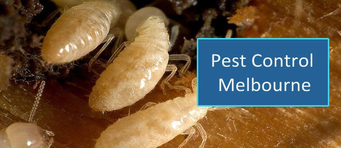 Master's Pest Control Melbourne provide professional local Pest Control & Inspection. Call on 1800 307 658 for Same Day Pest Fumigation Services. Professional exterminator and pest removal services for homeowners and businesses in cost effective & eco-friendly way removal of pests.Safe & Reliable Pest Controllers